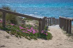 Paesaggi di Puglia - Marina di Lizzano (TA) (NIKOZAR (Nicola Zaratta)) Tags: mare marinadilizzano taranto mediterraneo fiori macchiamediterranea puglia italy dune sabbia nikond750 nikkor24120 marjonio