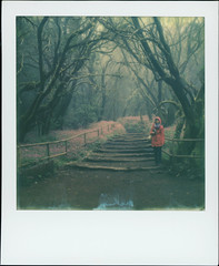 Parque nacional de Garajonay 50 (sycamoretrees) Tags: 600 analog canarias canaryislands color600 color600201512 color600generation30 film flowers fog forest garajonay girl impossible instantfilm integral integralfilm lagomera laurelforest laurisilva marianrainerharbach moss nationalpark parquenacionaldegarajonay path polaroid rainforest slr680 spain subtropics trail trees woman