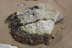 Oceanside, Oregon beach (nikname) Tags: beaches rocks rockybeaches naturalphenomena netartsbay naturesart naturalart oceansideoregon oregonbeaches oceansidebeach oceansidebeachoregon pacificcoast oregoncoast pacificnwbeaches seascapes pacificnorthwest oregonusa