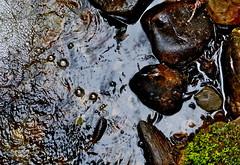 bubbles (jeansmachines24) Tags: stream wilsons bridge clyne bubbles march2017