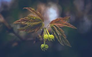 Nature-0814