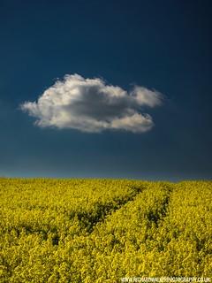 Lonesome Cloud