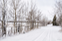 Snow in Spring (Quincey Deters) Tags: ©quinceydeters allrightsreserved canada nature outdoor 2017 april blurredmotion intentionalcameramovement icm motionblur colourimage horizontal highkey neutral black white brown art photoart landscape treeline tree fence road snow northamerica alberta elkislandretreat field winter spring