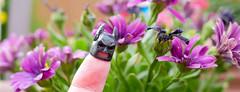 114 - A new Batman In Town (jbpro) Tags: 365 days photo challenge april batman lego flowers purple