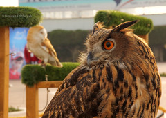 Face to Face (Nourah.A.Edhbayah (Super Flower♥إظبيه)) Tags: face owl kuwait q8 nourah edhbayah abdullah نورة عبدالله اظبيه الكويت