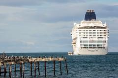 Costanera de Punta Arenas (Pablo Rodriguez M) Tags: chile puntaarenas norwegiansun cruise ship crucero costanera muelle pier ave bird