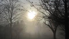 One foggy morning (katrienberckmoes) Tags: mystical foggy tree silhouette landscape early morning sunrise our backyard