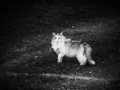 cat_night_bw (ladic_1) Tags: cat bw czech panasonic dmc fz50