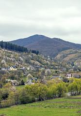 DSC08608 (igor_shumega) Tags: природа пейзаж горы дизайн дерево лес весна