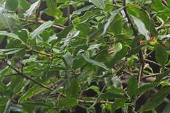 IMG_7402 (Ganugapenta NaveenKumar Reddy) Tags: northeast northeastindia mishmihills canon7d disnapper guyonblackybx gnaveenkumarreddy ganugapentanaveenkumarreddy gnr ganugapenta