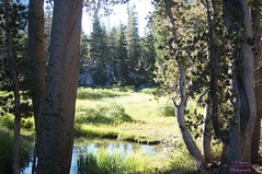 DSC06480 (intothesierra) Tags: convictlake owensriver owensrivergorge mammothlakes lake duckspass sierras fishing hiking nature backpacking
