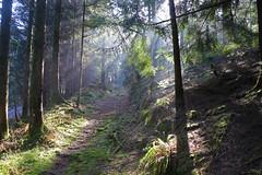 Tamar Trails (Jay Pegg) Tags: tamar trails tavistock noth devon trees sunbeams lightshafts light shafts woods shadow silhouette