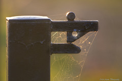 Latch (Neil Adams Photography (Wirral)) Tags: latch metal backlit backlight lowlight sunset web spidersweb starburst canon