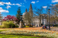 Gorsedd Gardens (andrebelg) Tags: spring cardiff wales 2017 flowers blossom civic centre
