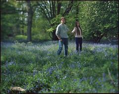 bluebells 2017 (steve-jack) Tags: sinar p 210mm kodak ektar 100 polorizing filter large format 5x4 4x5 film v500 epson swing bluebells bluebell wood hertfordshire 2017 tetenal c41 kit