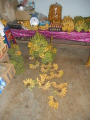 Banana harvest. (SierraSunrise) Tags: fruit banana musaceae thailand wiangkaen chiangrai