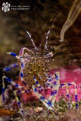 _MMN8677 (Miguel Angel Marquez) Tags: crustaceos faunasubmarina