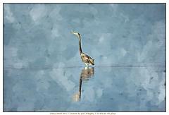 Tri-colored Heron (NancySmith133) Tags: tricoloredheron merrittislandnationalwildliferefuge nationalparks blackpointwildlifedrive centralfloridausa eastcoast painterly