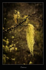patience (tiggerpics2010) Tags: scotland nature westhighlands woodland moss mossy trees growth life green river