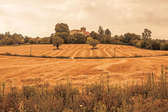 _Q9A5452 (gaujourfrancoise) Tags: france southwest sudouest charente fields champs été summer ocher ocre