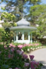 Parc de Procé - Nantes (beatriceguilbaud) Tags: kiosque printemps nantes procé nikon parc fleurs tulipes pdc bokeh soleil bonheur douceur quiétude