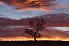 Fire In The Sky (Chamblin1) Tags: coloradosunset lonetree spring sky pasture