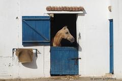 Royal Club Equestre De Tanger (farahleon) Tags: royalclubequestredetanger tanger tangier horse morocco