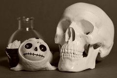 'Furry Bones' baby seal with skull (MuTant 99) Tags: home furrybones figurine resin skull bw sepia pentaxk3