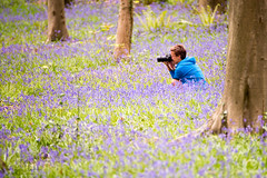 A lesser spotted Tog! (~g@ry~ (clevedon-clarks)) Tags: bluebellwood bluebells spring springflowers flowers trees 200mm f28 uk summerflowers summer garden forest woodland southwest england europe shallow dof blue