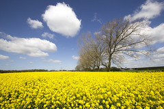 April in Warwickshire (Landscape) (JW.Andrews) Tags: rapeseed april warwickshire kenilworth spring flowers flower argiculture farming farm clouds cloud sun