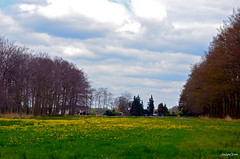 Landscape Forest - On Explore (JaapCom) Tags: jaapcom landscape flowers flower clouds wezep trees dutchnetherlands hollanda natural nature