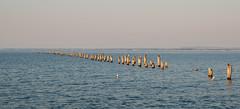 Lines of Flight (Keith Midson) Tags: bridport bird seagull ocean sea water pier old oldpier tasmania coast coastline flying haze sigma 2470mm f28 canon 1dmarkiii