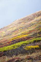 Flickr_NIK3232 (Tony Rowlett) Tags: autumn colors alaska tony anchorage rowlett arcticvalley tonyrowlett