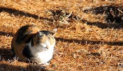 winterzeit_dez2012_02__edited (pixEOS.de) Tags: katze sonnenschein