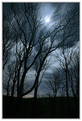 Moonlight Trees (3,6,9 Seconds of light) Tags: blue trees light sky moon silhouette night clouds canon stars woods glow darkness bright moonlit nighttime moonlight 5d lunar stranraer dumfriesandgalloway kirkmadrine sandhead wigtownshire