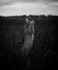 meadow (Timoleon Vieta II) Tags: leica cambridge boy bw baby beautiful cat evening key low baku timoleon