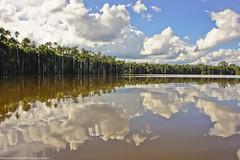 Amazon Basin, Peru (OsPassosDoGatoPreto) Tags: reflection peru southamerica clouds amazon rainforest jungle latin tropic amazonbasin