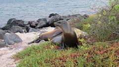 Galapagos - San Cristobal-41