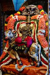 . (Kapaliadiyar) Tags: navaratri maheshwari kapaleeswarartemple navarathri navaratricelebrations kapaliadiyar kapaleeswarartemplemylapore nikond7100