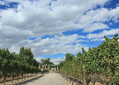 G is for Grapevines (Helen Orozco) Tags: newmexico g grapevines bernalillo landofenchantment northvalley alphabetgroup casarondeñawinery