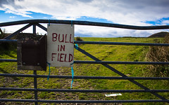 Bull in field (s e c o n d - d y s t o p i a) Tags: sky water field grass birds animals out walking outdoors scotland scary fishing sheep fife pray going bull reservoir biking fields keep farmer supply lomand