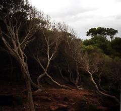 Cala Pilar.Menorca.09-14.(9) (joseluisgildela) Tags: paisajes menorca playas mediterráneo dunas calapilar