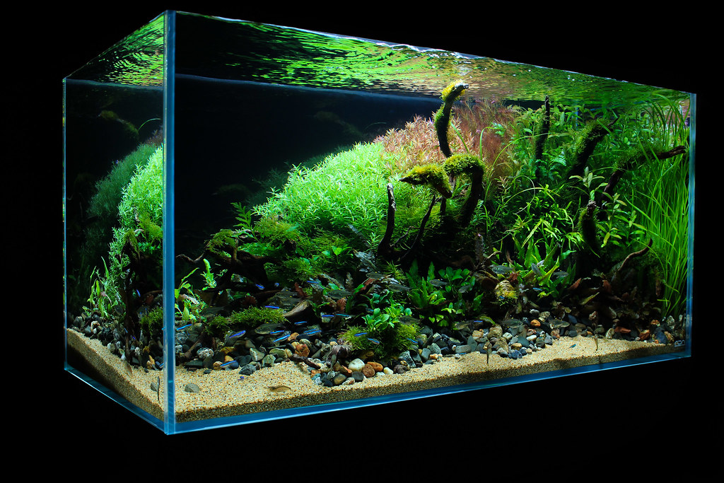 The world 39 s most recently posted photos of aquascaping and for Ada fish tank