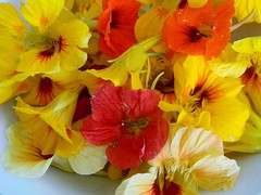 Delicious Beauty (yummysmellsca) Tags: flowers food floral vegetables vegan kaleidoscope delicious vegetarian colourful edible homegrown nasturtiums glutenfree edibleflowers comestible