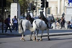 Met Police Equine Unit (kenjonbro) Tags: uk england horses white london westminster female trafalgarsquare mounted dappled charingcross equine sw1 metropolitanpolice metropolitanpoliceservice worldcars kenjonbro canoneos5dmkiii