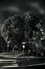 ... ciao Maruska ... (UBU ) Tags: blancoynegro noiretblanc blues biancoenero blupolvere ubu blutristezza unamusicaintesta landscapeinblues luciombreepiccolicristalli