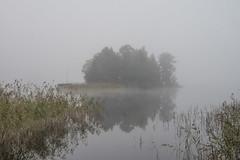 Mystery lake (Storkholm Photography) Tags: morning mist lake reflection nature water fog mystery landscape island 50mm grey mirror bay nikon europe day sweden seed scandinavia cosy 50mmf14 sörmland mälaren strängnäs d610 mariefred södermanland