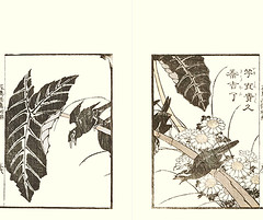 Crown daisy and common hill myna (Japanese Flower and Bird Art) Tags: flower bird art japan japanese book hill picture ii daisy crown common chrysanthemum asteraceae woodblock katsushika religiosa taito myna ukiyo coronarium sturnidae gracula readercollection