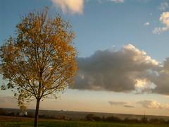 Der Himmel ist so tief und blau (amras_de) Tags: autumn tree automne herbst herfst tr boom arbor rbol otoo toamna albero tre puu autunno arbre rvore haust strom baum outono arbo hst fa trd tr hst syksy tardor podzim ruduo koks sgis drvo rudens drzewo sonbahar jesen jesien medis hairst arbore aga stablo efterr zuhaitz osz crann drevo udazken autunnu autumnus autuno agerro hierscht fmhar rvulu