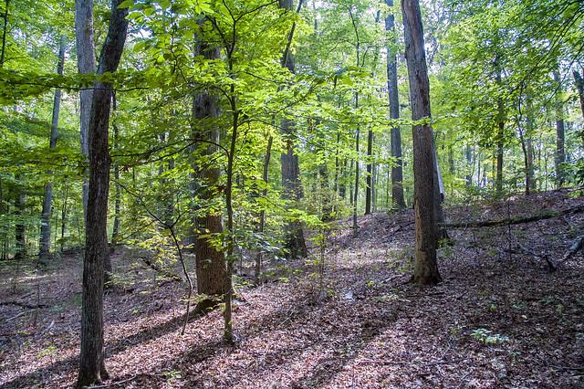 White Oak Nature Preserve - September 20, 2014